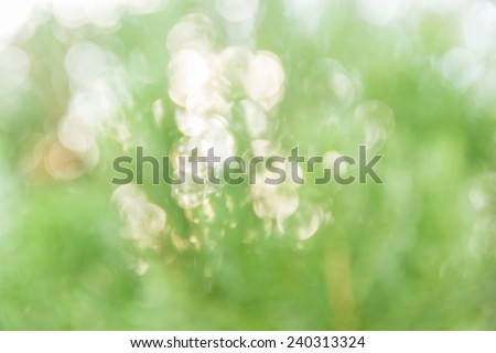 Abstract bokeh and blurred green nature background model is used to enter text.
