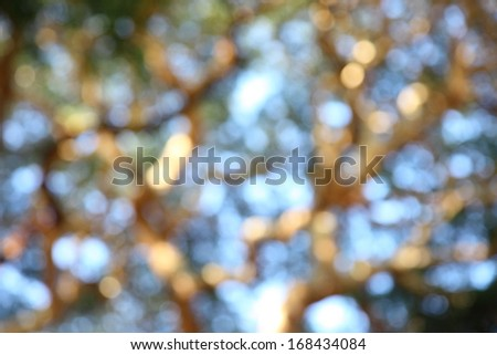 Abstract Bokeh of tree color background - stock photo