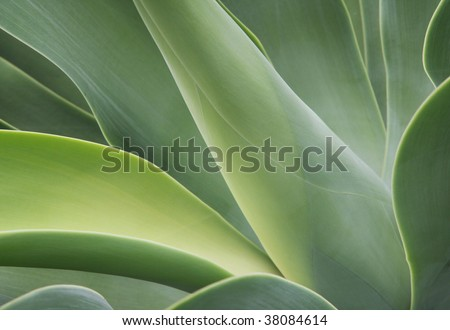 abstract cactus - stock photo