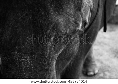 Abstract capture representing a part of elephant's head with visible eye, black and white edition - stock photo