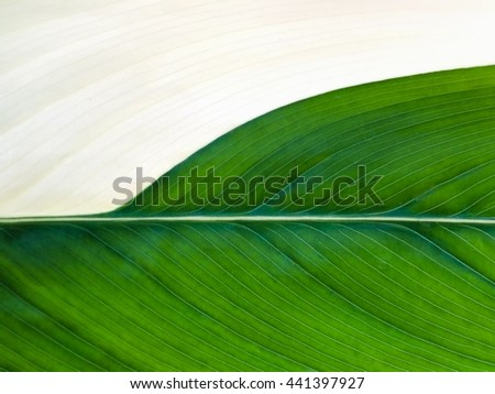 Abstract close up green leaves background