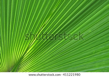 Abstract close-up of a green palm leaf - stock photo