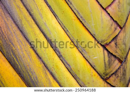 Abstract close up of a Traveller palm tree stem - stock photo