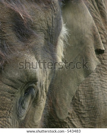 Abstract Close-Up of Indian Elephant