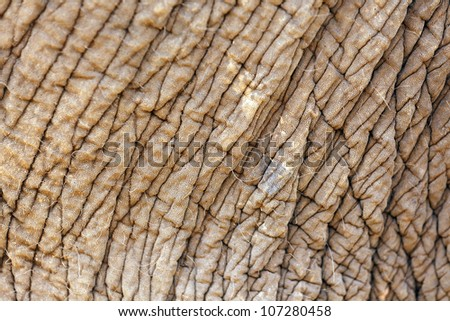 abstract closeup on elephant skin background - stock photo