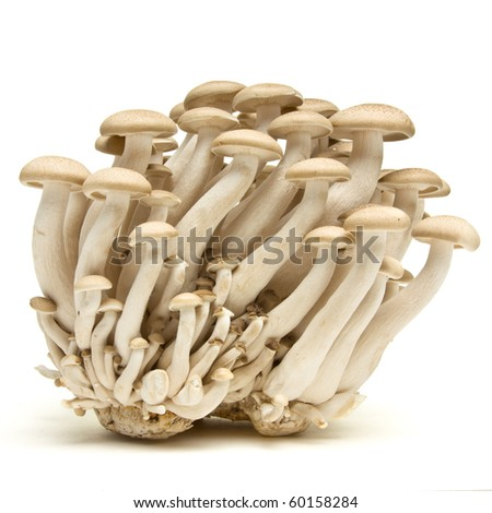Abstract clump of Brown beech mushrooms ( Buna Shimeji) isolated on white. - stock photo