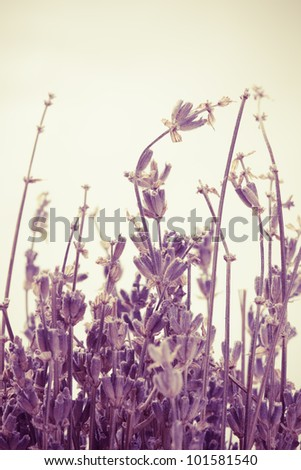 Abstract colored lavender on warm background with empty space - stock photo