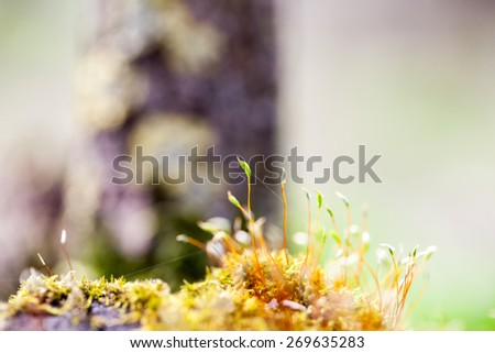 Abstract, colorful composition with moss flowers in spring
