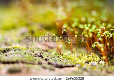 Abstract, colorful composition with moss flowers in spring - stock photo