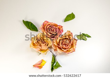 Abstract composition - dried roses with green leafs