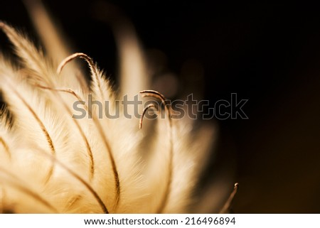 Abstract composition with dried clematis seeds and light
