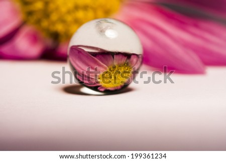 Abstract composition with flower reflected in a glass ball - stock photo