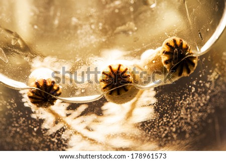 Abstract composition with poppy seeds, water and bubbles