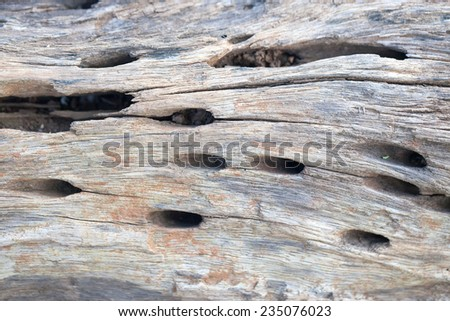 Abstract crack and holes wood ancient background