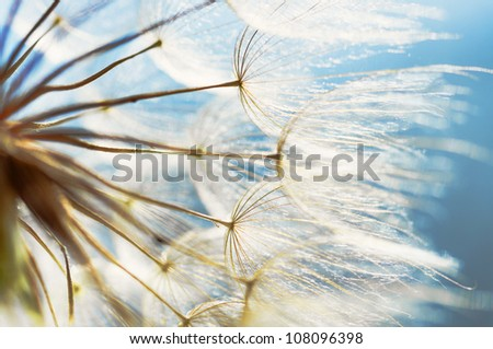 abstract dandelion flower background, closeup with soft focus - stock photo