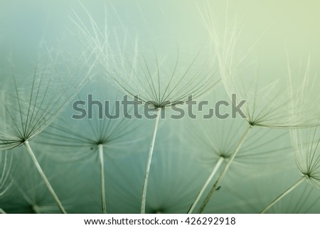 Abstract dandelion flower background, extreme closeup. - stock photo
