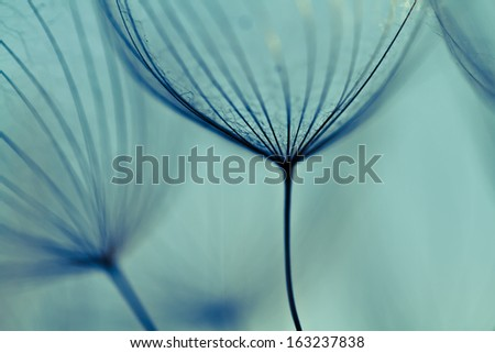 Abstract dandelion flower background, extreme closeup. Big dandelion. Art photography - stock photo