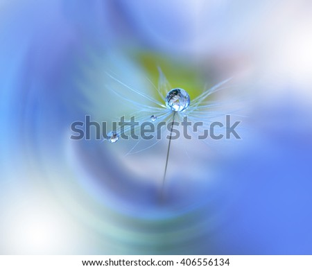 Abstract dandelion flower seeds with water drops background. - stock photo