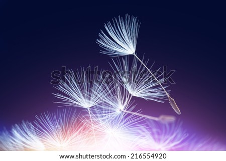 Abstract dandelion seeds, purple lighted - stock photo