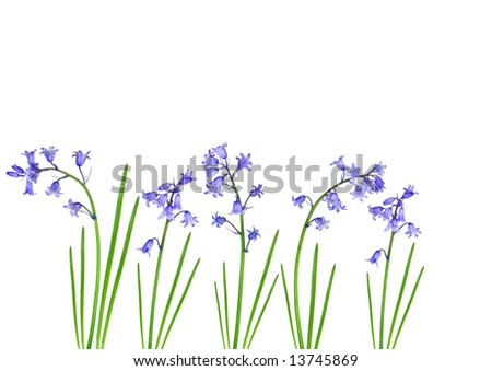 Abstract design of bluebell flowers set against a white background.