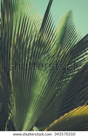 Abstract exotic background. Palm leaves. Retro toned.