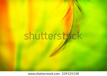 Abstract Feather - stock photo