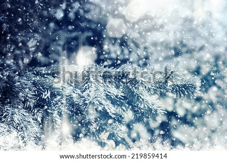 abstract fir tree background - stock photo