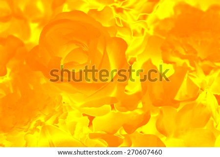 abstract flame rose flower  painting style - stock photo