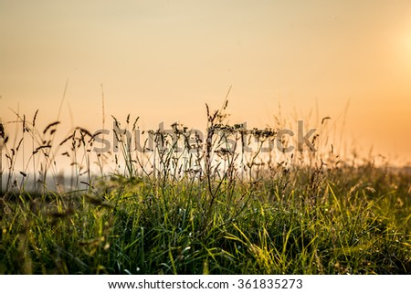 Abstract floral background / Plants in the evening light