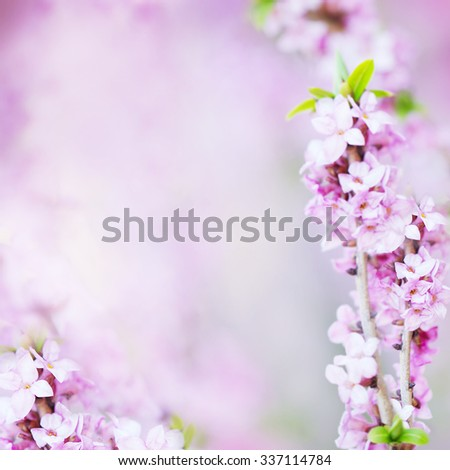Abstract Floral Blossom Blurred Background with Lilac Flowers - stock photo