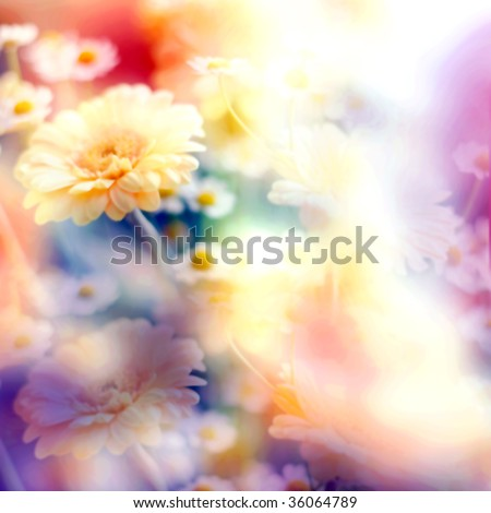 abstract floral pastel toned backgound with camomiles - stock photo