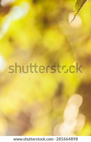Abstract floral yellow background with bokeh effect - stock photo