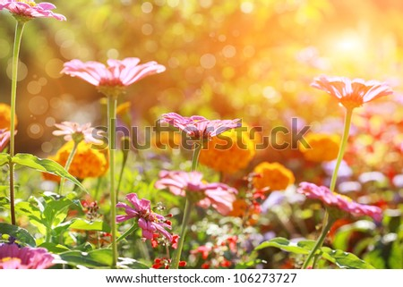 Abstract flowerbed in sunny day, shallow DOF