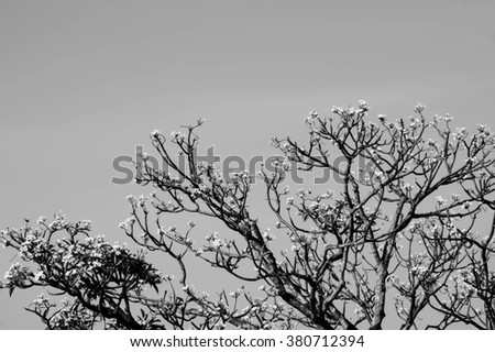 Abstract flowers and branch tree, black and white