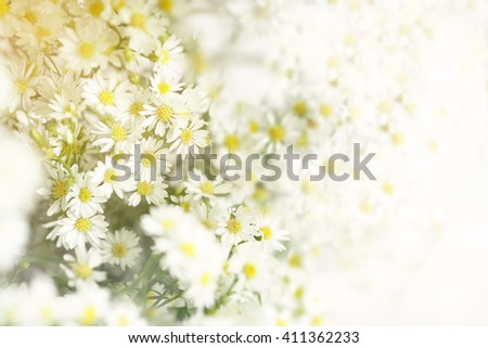 Abstract flowers background with Sunrise
