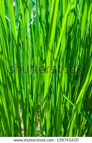 Abstract fresh grass background shallow depth of field. - stock photo