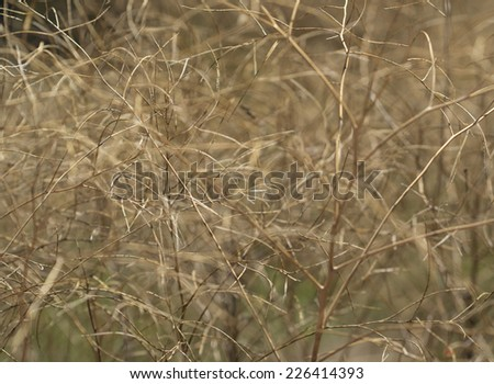 Abstract golden plant background with wiry tangled look