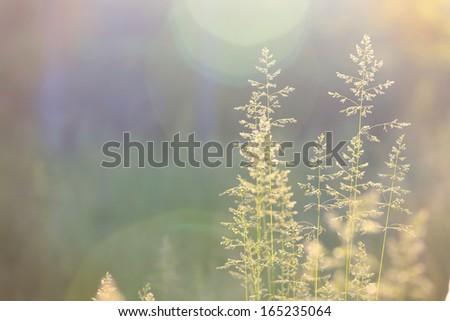 abstract grass background with sun beams illuminating at the camera  - stock photo