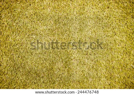 Abstract grass in the background vintage tone. - stock photo