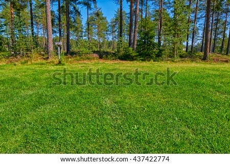 Abstract Grassy Pine forest Campsite Pitch with Electricity Connection - stock photo
