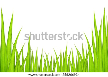 Abstract green grass leaves isolated on white background with copy space. - stock photo