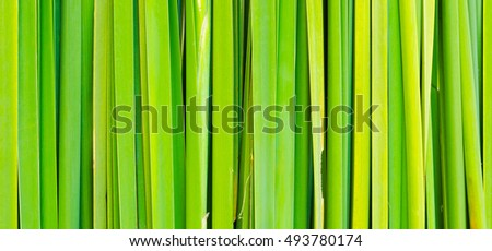 Abstract green leaf background, Green leaves