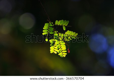 abstract green leaf in beautiful light with bokeh in morning - stock photo