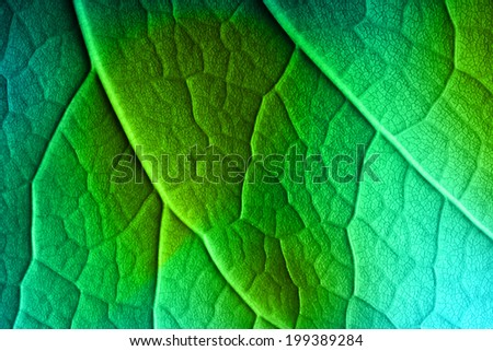 Abstract green leaf macro background. - stock photo