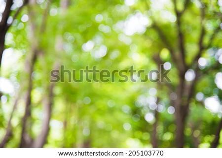 Abstract green nature bokeh - stock photo