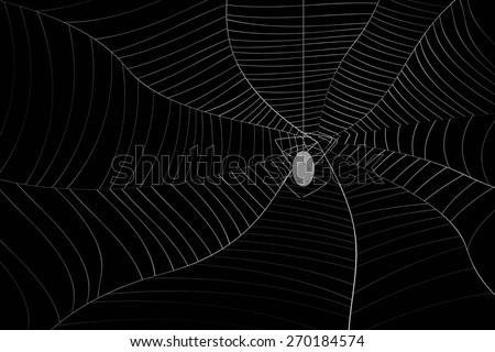 abstract grey spider web or cobweb with spider with gray line isolated on black background. raster illustration.