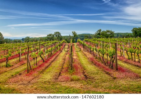 Abstract Highway to vineyard in beautiful landscape scenery.