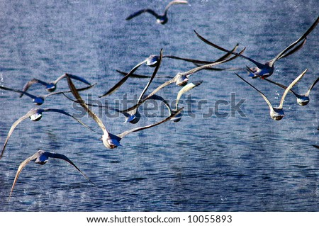 abstract illustration of a flock of seagulls in flight with plenty of space for text - stock photo