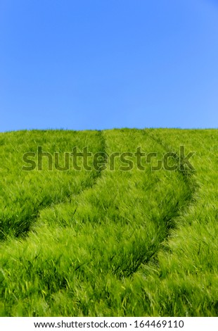 Abstract image of a barley field