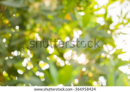 Abstract image of bokeh leaf with sunlight. Nature background